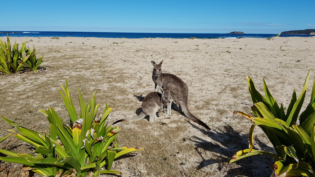 5 Days around Australia Private Tour