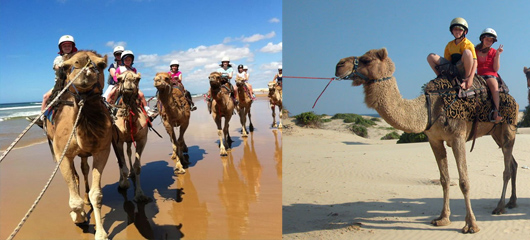 Camel Ride Anna Bay NSW