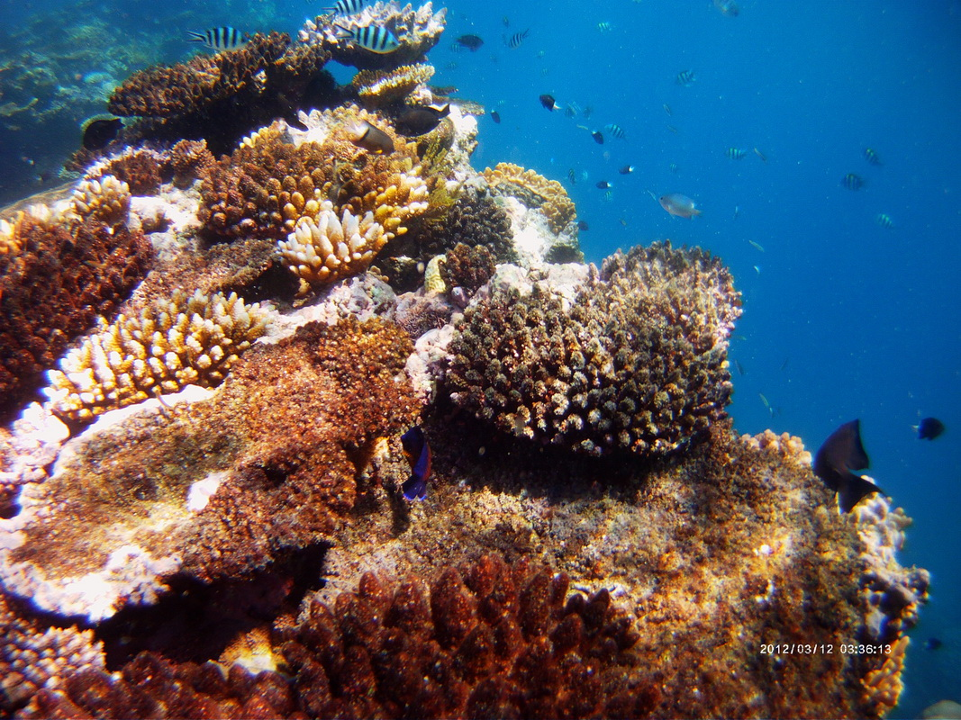 Great Barrier Reef Tour in Small Group