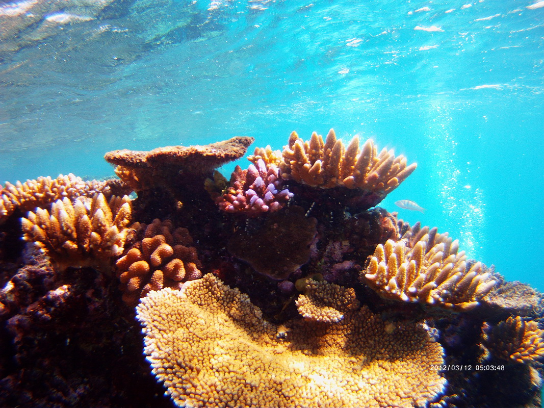 Great Barrier Reef Tour in Small Groupr
