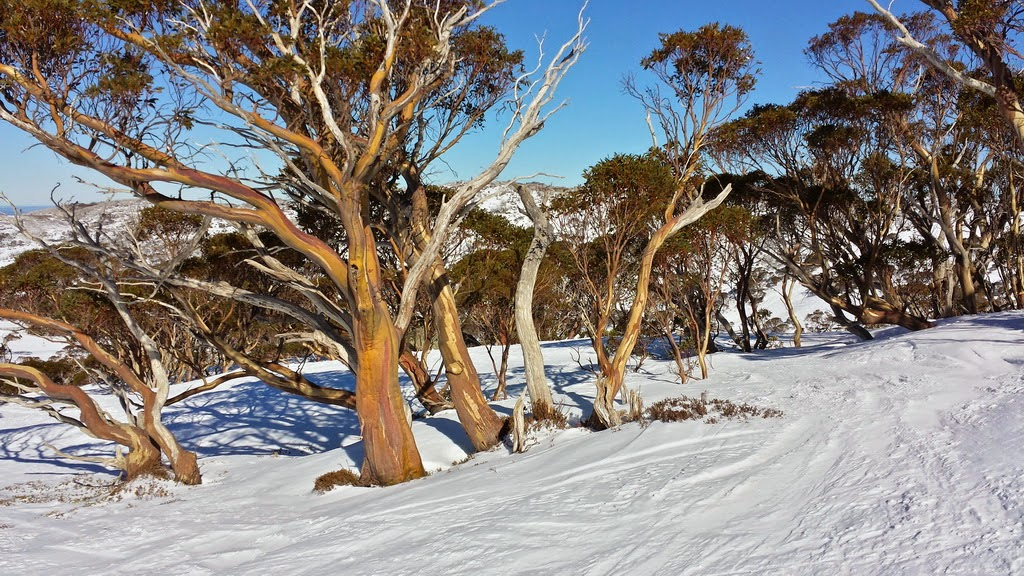 Private Guided Tour to Goulburn, Canberra, Snow Mountains
