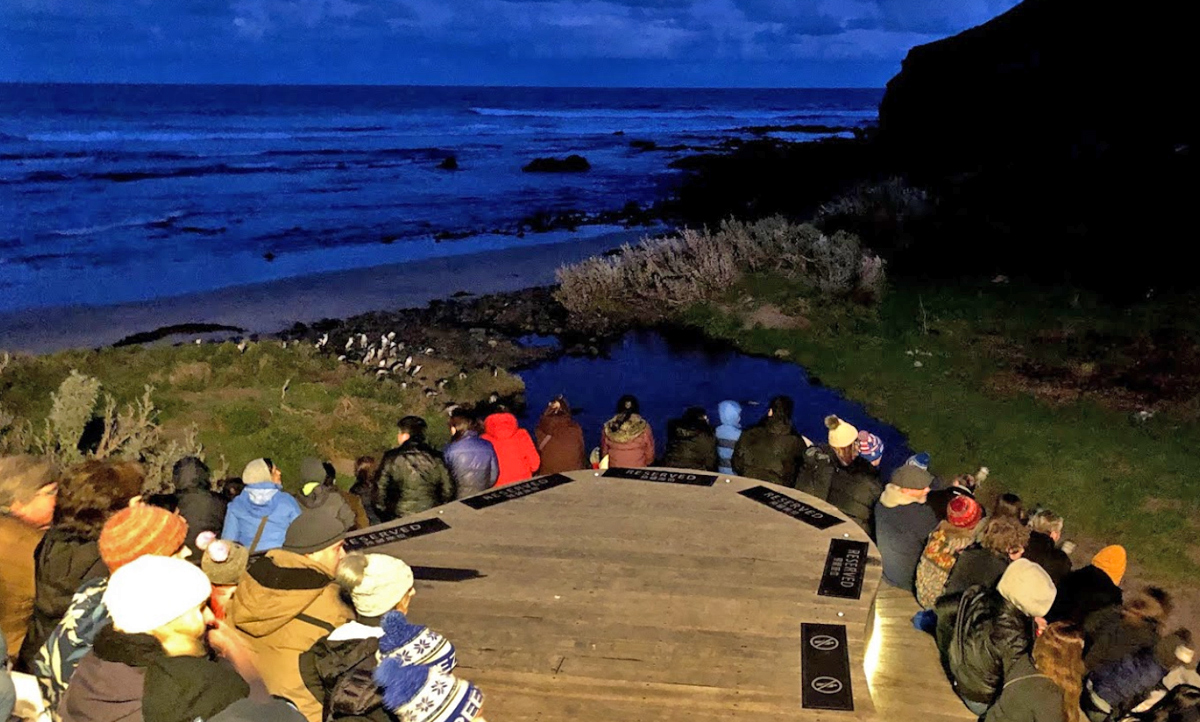 Phillip Island Private Tour with Penguin Parade Private Tour