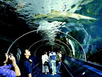 Sydney Aquarium - Darling Harbour